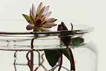 Art File / Flowers / by Diane K. Ryan