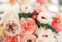 WEDDING. FLORAL / by JEN H.