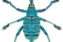 beetles & bugs / by Gordana Tvorek