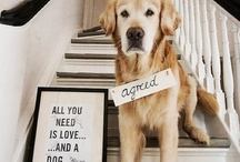 More than just our Pets / Our pets are our family. They give unconditional love no matter what!  I love my fur babies more than anything!  / by Leigh Giddings
