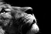 In like a Lion, out like a Lamb /    / by Leigh Giddings