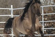 Horses and Riding / People come and go, but horses leave hoof prints on your heart. Riding and training tips, caring for your horse, inspirational stories, how-tos, and more.