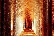 The Woods / by Simona Simone