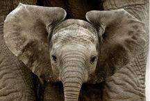 Elephants, Elephants, Elephants :-)