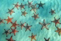 Ocean Vibes / We may be landlocked but that doesn't mean we can't dream about the ocean! - Starfish Jewelry