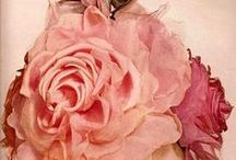 Rosy Posy / All things rose!