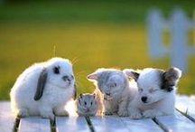 Cuteness!! / by Olga Estrada