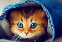 Kitty Kitty / Cat Humor / by Leslie Marsh