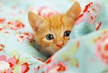 Meow. / We <3 cats and kittens!