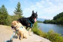Dog-friendly road trip / Products, ideas, and strategies for planning and taking a dog-friendly road trip.