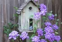 Garden / by Joanne Morgan