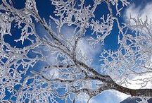 Winter Wonderland / The beauty of winter / by Cindy Adkins
