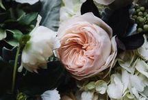 Flowers / by Elizabeth Miller-Jenkinson