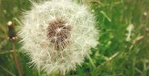 """Wünschenswert / Noelia Blanco / Valeria Docampo: """"Im Garten der Pusteblumen"""". Im Tal der Windmühlen lebten Männer, Frauen und Kinder, genau wie überall. Bis eines Tages die Perfekten Maschinen kamen. Die Bewohner des Windmühlentals mussten nur auf einen Knopf drücken, um in einer perfekten Welt zu leben. Perfekt und langweilig. So kam es, dass alle aufhörten zu Wünschen. Alle, bis auf Anna ...  https://mixtvision.de/buecher/im-garten-der-pusteblumen/ und http://pusteblume-app.de/"""
