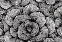 BW Lines/Pattern / by Mattie Weiss