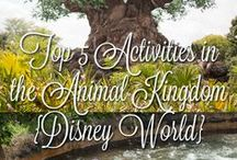 Disney Vacation Planning / For trip planning to both Disneyland and Disney World.