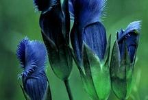 colour ::: blue+green