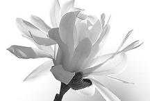 colour ::: white