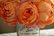 colour ::: orange