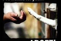 Adoptable Pals