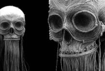 Skeletal Fashion / Fashion inspired by skeletons / by V C