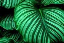 Colours: emerald