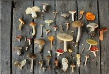 Mushrooms  | Mycology / Everything mushroom & fungi