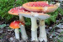 1. svampar, lavar, mossor, annan skogsvegetation