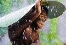 Singes - Monkeys / L'animal le plus fascinant qui soit selon moi : le singe. Si j'avais pu, je serais devenue ethologue pour les protéger et les comprendre.