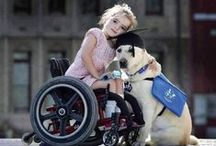 Service Pups / Honoring all the service dogs that support their humans daily!