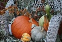 Fall Is My Favorite / by Vickie Miller