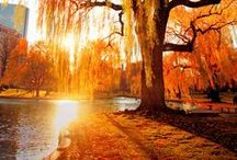 Beautiful trees / by Chastity