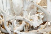 Antler Obsession / Antlers Used in Home Decor / by Cindy Hattersley Design/Rough Luxe Lifestyle Blog