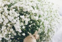 Future Wedding Ideas / Ideas for our future wedding  / by Shannon Smith