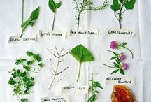 Wild Plants / Wild plants and weeds have so many uses!