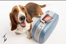 Pet Friendly Nurse Travel / Source One is a one of a kind healthcare staffing company and it is Pet Friendly!