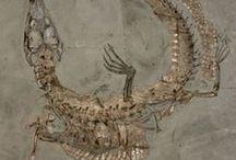 Fossils / by Gloria Z Longoria
