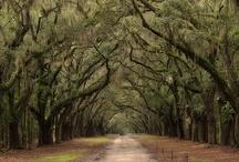 Deep South, Darling! / Ideas for Christmas vacation to Savannah and Charleston / by Kyla Eckford