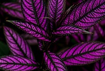Gardening / by Linda Roach