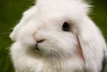 Raising Rabbits / All about raising & caring for rabbits. Rabbit care, information, tutorials, helpful hints, and housing.
