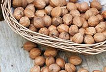 Growing your own NUTS! / Want to grow your own nuts on your homestead or property? Here's some resources to get you started!