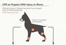 Helpful Hints: Pets