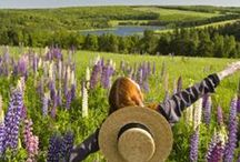 Prince Edward Island / Visiting the beautiful home of Anne Shirley: Prince Edward Island.