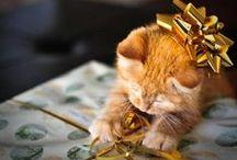 Cats - Christmas / Entertaining kitties
