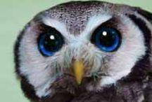 Birds, Owls