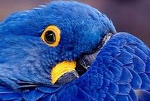 Birds, Colorful Rainforest