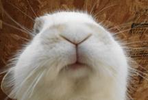 Bunnies! / by Susan Phelan