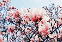 Spring / by Adrianna Keczmerska