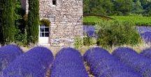 My Provence / Landschaften der Provence, französische Lebensart, der Duft von Lavendel und das leckere Essen. Südfrankreich ist einfach traumhaft, man kann sich an Motiven nicht satt sehen, die Farben der Häuser, die Berge in der Ferne, das wunderbare Klima - man sollte mal wieder hin....