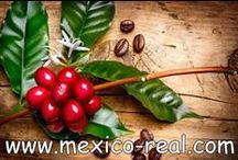 Mexico Real Cafe Europe: Speciality Coffee / Winner of 2 stars in the International Taste Award 2016 by iTQi, Brussels. Artisan Roast Espresso & Green Coffee Beans. Roasted in Small Batches in The UK. Our Gourmet Mexican Coffee is among the world's best Arabica coffees. Find us on: The UK, the USA, IT, ES, FR. Follow us on: Facebook, Twitter, Instagram, google+, Linkedin.  We deliver worldwide:  www.mexicorealcafe.com/store/     e-mail: mexicorealcafe@gmail.com